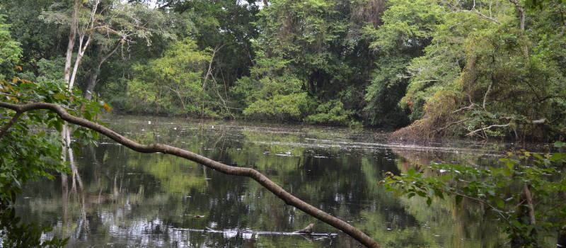 Guatemala marcha hacia la conservación a través de los mercados sostenibles