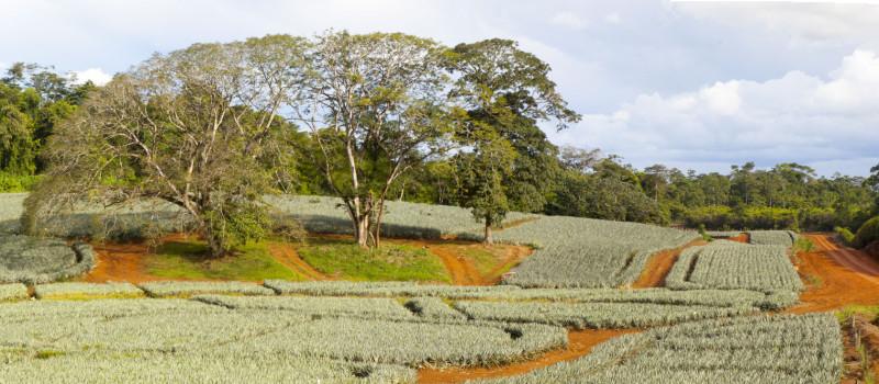 """Vea en LatinClima """"Los negocios también significan conservar la biodiversidad"""""""