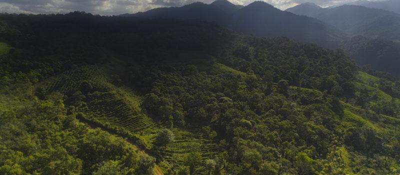Reserva Bosque La Tigra: Biodiversidad en Acción, Costa Rica